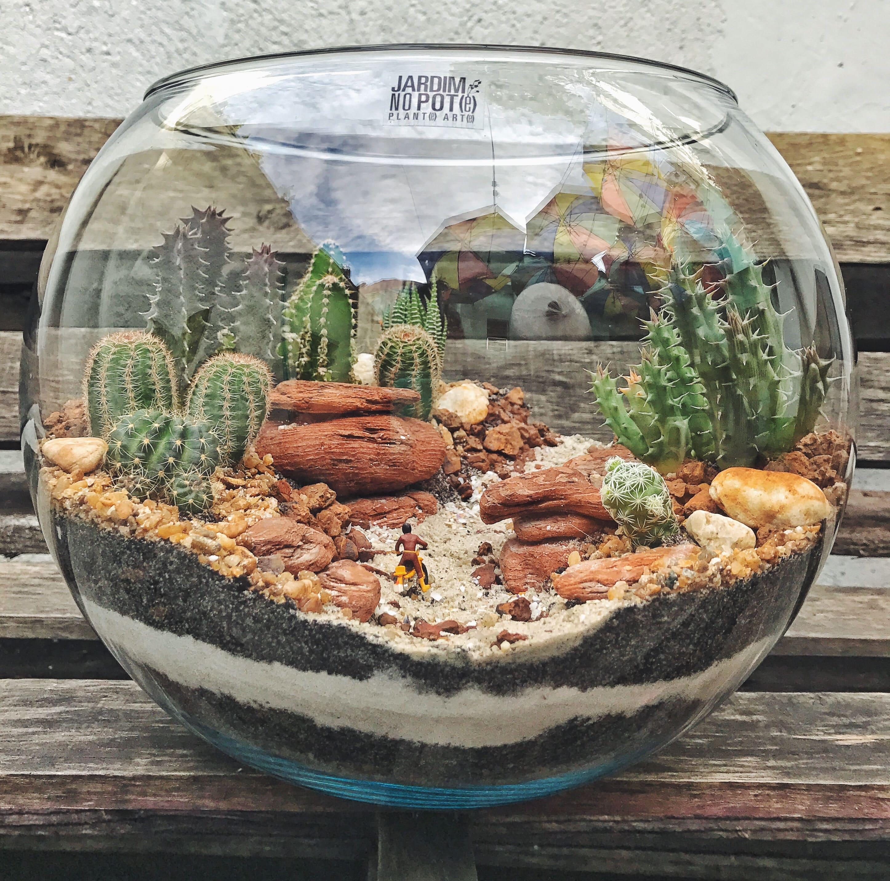 Jardim No Pote 174 Cactus E Suculentas